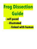 Frog Dissection Guide / Free Teacher's Guide (for my self-paced student guide)