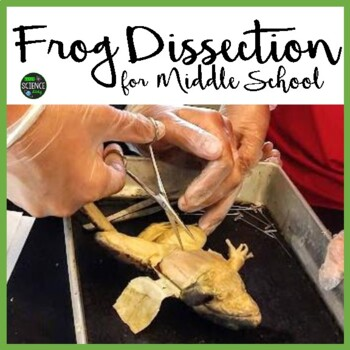 Frog Dissection Lab