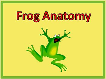 Frog Dissection Photos [Frog Internal Anatomy Pictures]