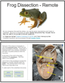 Frog Dissection - Virtual Activity (KEY)