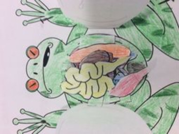 Frog Dissection and organ system foldable