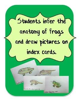 Frog Evolution Flipbook