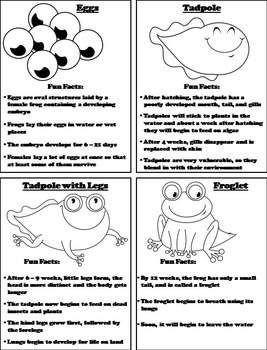 The Life Cycle of a Frog Activity Foldable: Eggs, Tadpole, Froglet Etc.