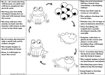 The Life Cycle of a Frog Activity/ Foldable: Eggs, Tadpole, Froglet Etc.