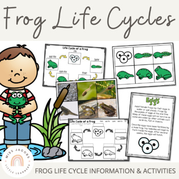 Frogs: A Life Cycle of a frog mini unit