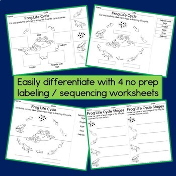 Frog Life Cycle: 3 Part Cards, Observation Journal, and Worksheets