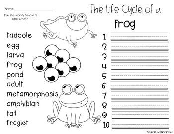 Frog Life Cycle: ABC Order