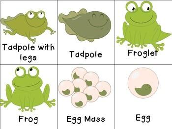 Frog Life Cycle Activities