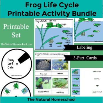 Frog Life Cycle Activities by Levels