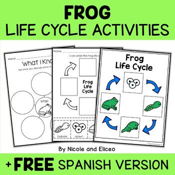 Vocabulary Activity - Frog Life Cycle