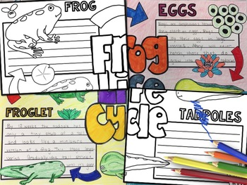 Frog Life Cycle Activity: Collaborative Research Poster