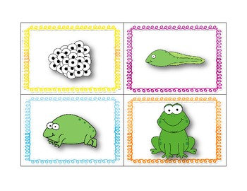 Frog Life Cycle Activity Packet