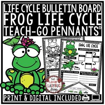 Frog Life Cycle Activity • Teach-Go Pennants