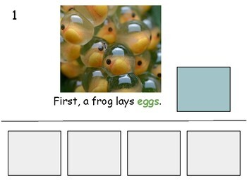 Frog Life Cycle Adapted Book Level 1
