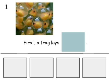 Frog Life Cycle Adapted Book Level 4