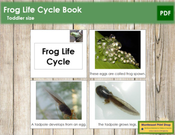 Frog Life Cycle Book - Toddler