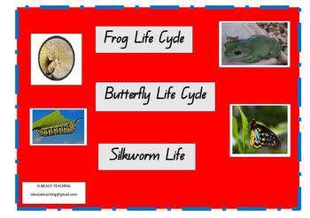 Frog Life Cycle, Butterfly Life Cycle, Silkworm Life Cycle