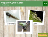 Frog Life Cycle Cards - Toddler