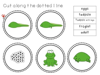 Frog Life Cycle Center and/or Worksheet
