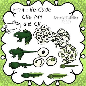 Frog Life Cycle Clip Art