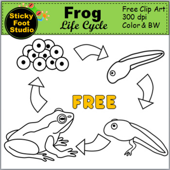 Frog Life Cycle Clip Art - Science Clip Art