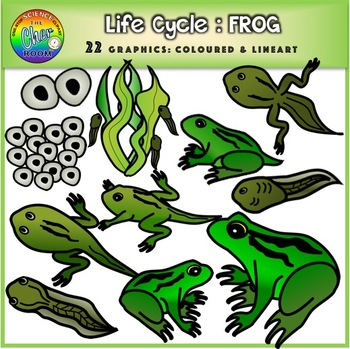 Frog Life Cycle Clipart