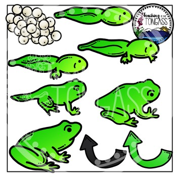 Frog Life Cycle Clipart Bundle