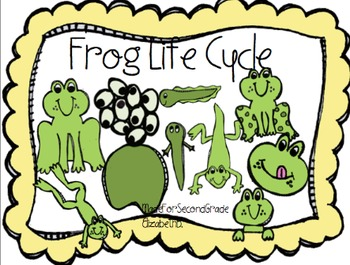 Frog Life Cycle Clipart -MadeForSecondGrade