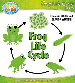 Frog Life Cycle For Kids Worksheet Frog Life Cycle...