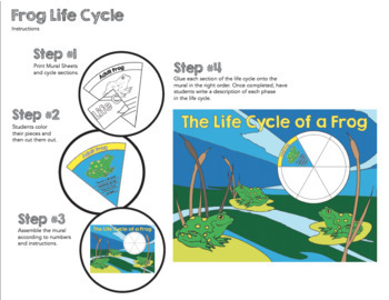 Frog Life Cycle Collaborative Poster - Science and Art Activity