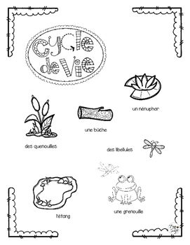 Frog Life Cycle Craftivity ~ French ~ La grenouille