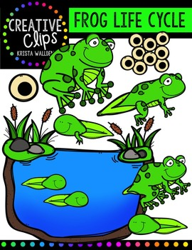 Frog Life Cycle {Creative Clips Digital Clipart}