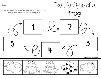 Frog Life Cycle: Cut/Paste