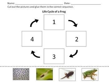 Frog Life Cycle - Cut and Glue Sequence Activity