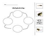 Frog Life Cycle Cut and Glue