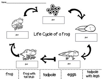 Frog Life Cycle Cut And Paste Worksheets Teaching