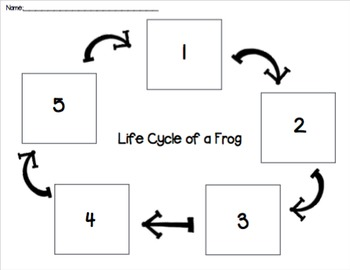 Frog Life Cycle Cut and Paste PACK