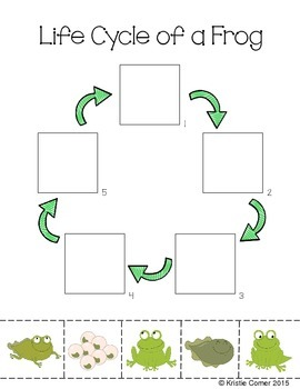 Frog Life Cycle Cut and Paste Worksheet by Lemons and ...
