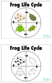 Frog Life Cycle - English & Spanish
