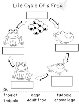 Frog Life Cycle File Folder Games and Worksheets