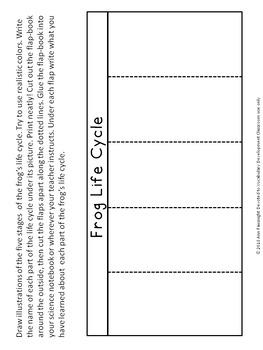 Frog Life Cycle Flapbook