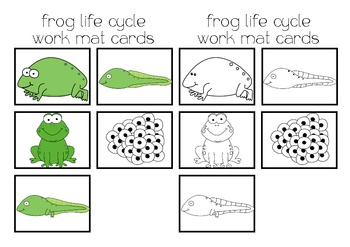 Frog Life Cycle Flash Cards & Work Mat
