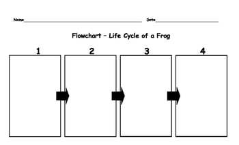 Frog Life Cycle Flow Chart