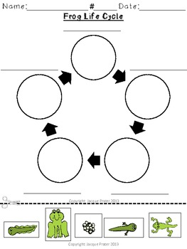 Frog Life Cycle Unit | Free worksheets, Worksheets and Cycling