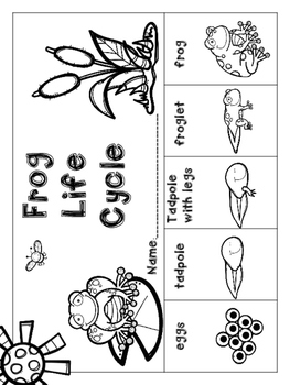 Frog Life Cycle Freebie