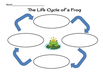 Frog Life Cycle Graphic Organizer