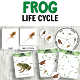 Frog Life Cycle Insect Activities