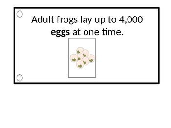 Frog Life Cycle Interactive Book + Activity Worksheets