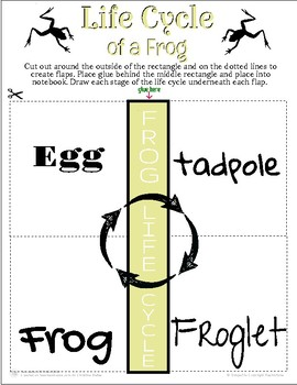 Frog Life Cycle Interactive Notebook
