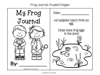 Frog Life Cycle Investigation